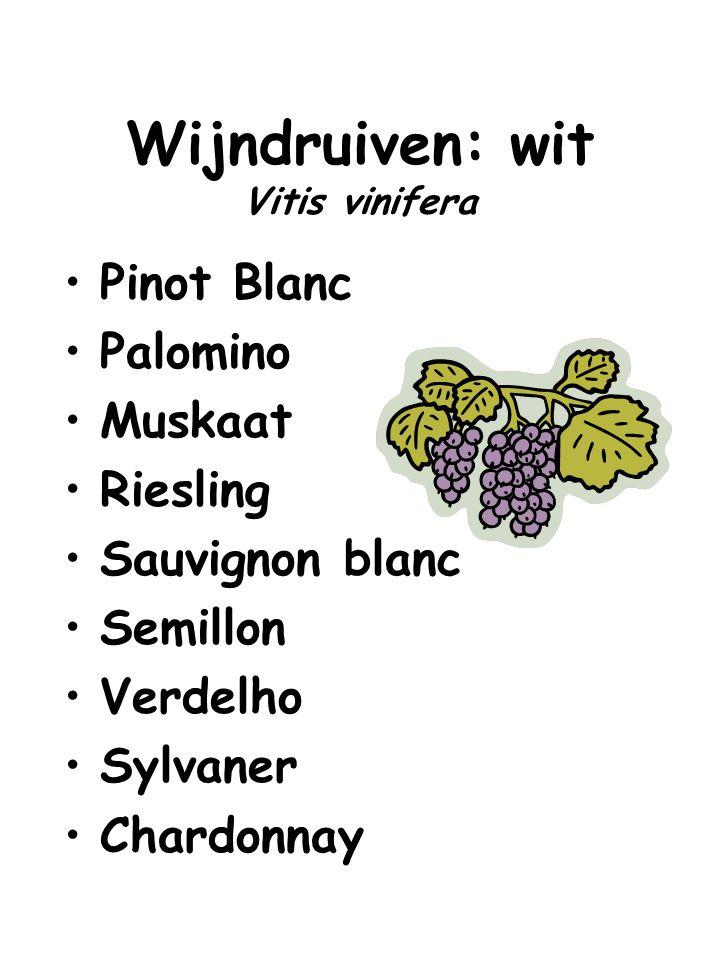 Wijndruiven: wit Vitis vinifera