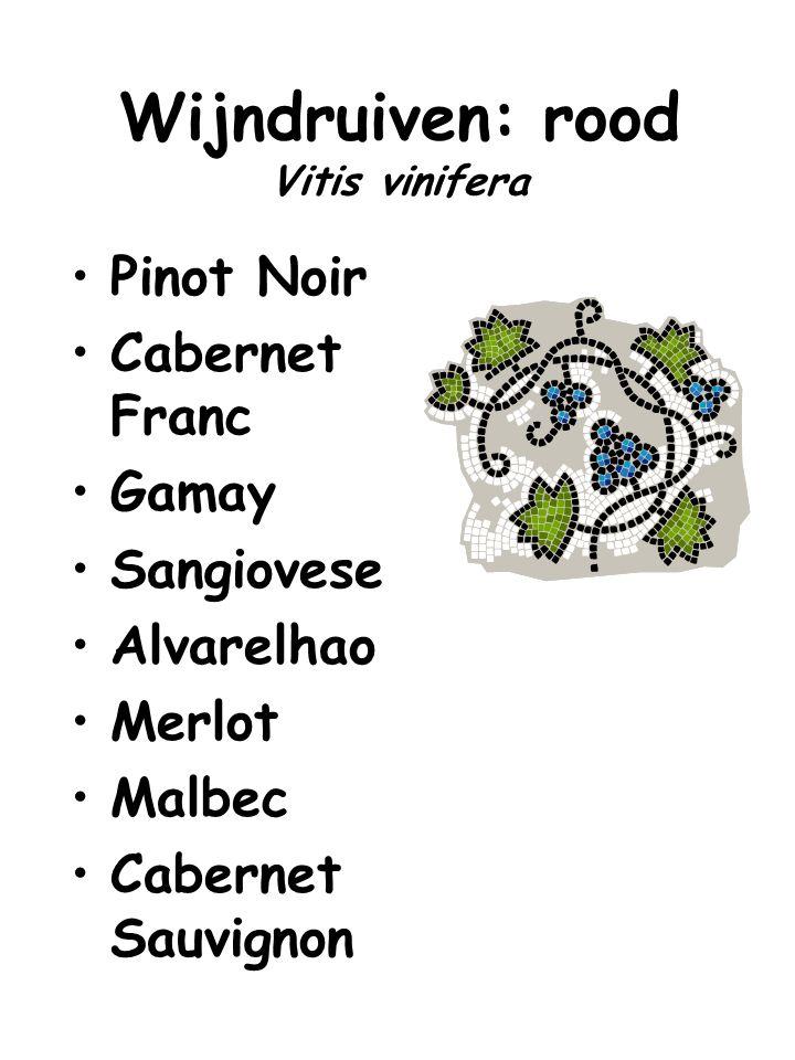 Wijndruiven: rood Vitis vinifera