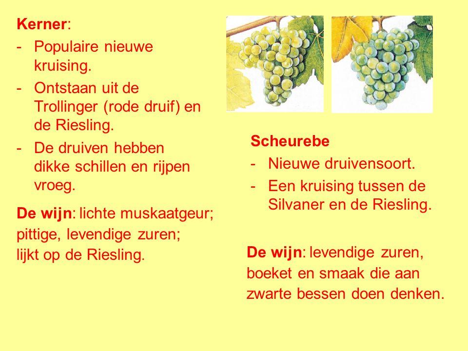 Kerner: Populaire nieuwe kruising. Ontstaan uit de Trollinger (rode druif) en de Riesling. De druiven hebben dikke schillen en rijpen vroeg.