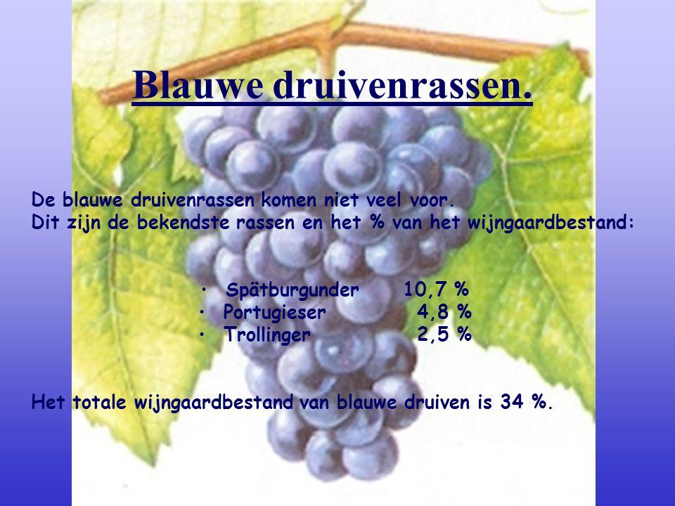 Blauwe druivenrassen. De blauwe druivenrassen komen niet veel voor.