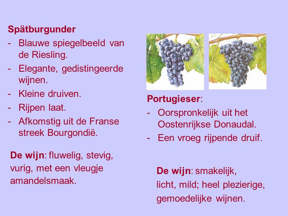 Spätburgunder Blauwe spiegelbeeld van de Riesling. Elegante, gedistingeerde wijnen. Kleine druiven.