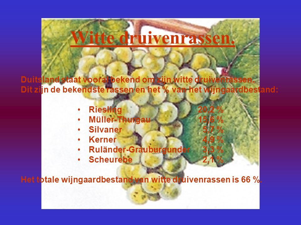 Ruländer-Grauburgunder 3,3 %