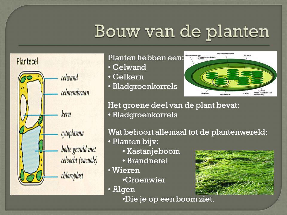 Bouw van de planten Planten hebben een: Celwand Celkern