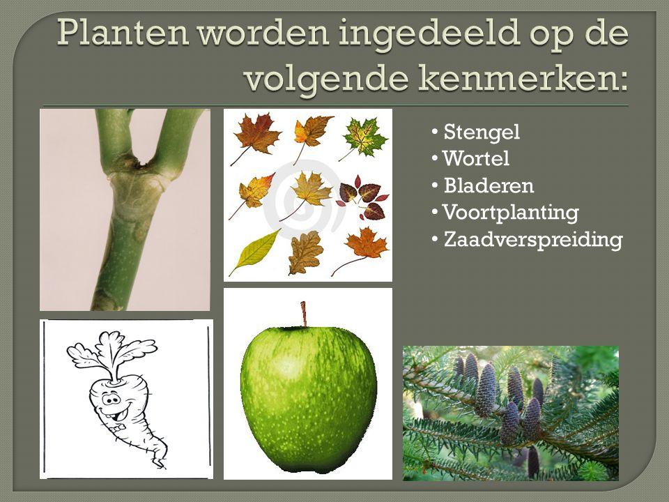 Planten worden ingedeeld op de volgende kenmerken:
