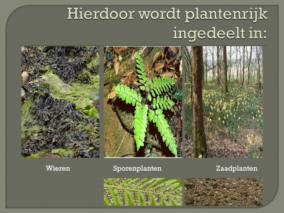 Hierdoor wordt plantenrijk ingedeelt in: