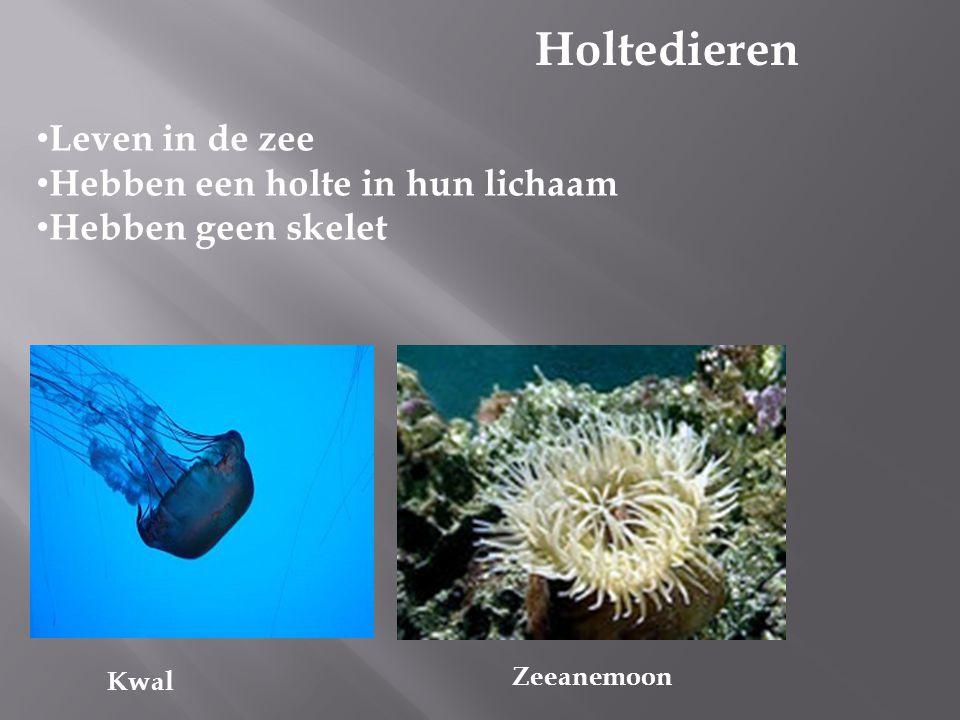 Holtedieren Leven in de zee Hebben een holte in hun lichaam