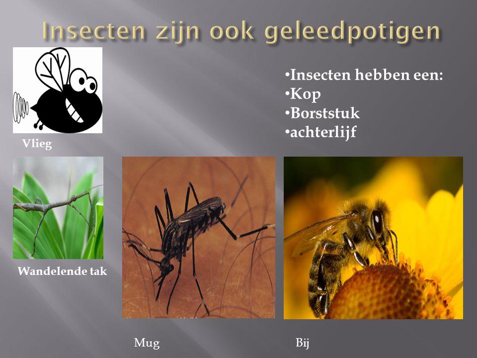 Insecten zijn ook geleedpotigen