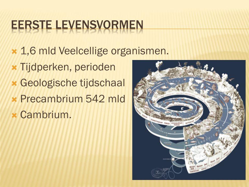 Eerste levensvormen 1,6 mld Veelcellige organismen.