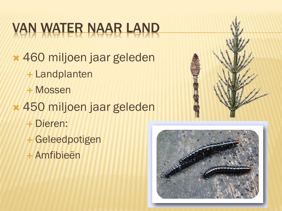 Van water naar land 460 miljoen jaar geleden 450 miljoen jaar geleden