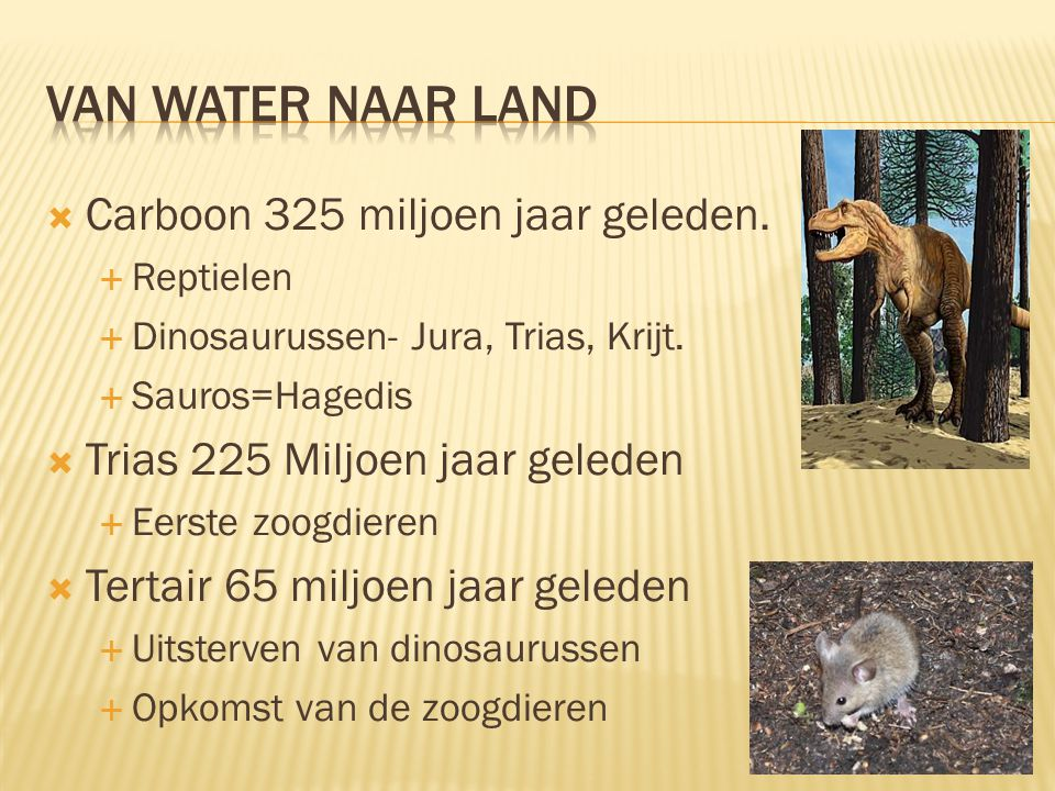 Van water naar land Carboon 325 miljoen jaar geleden.