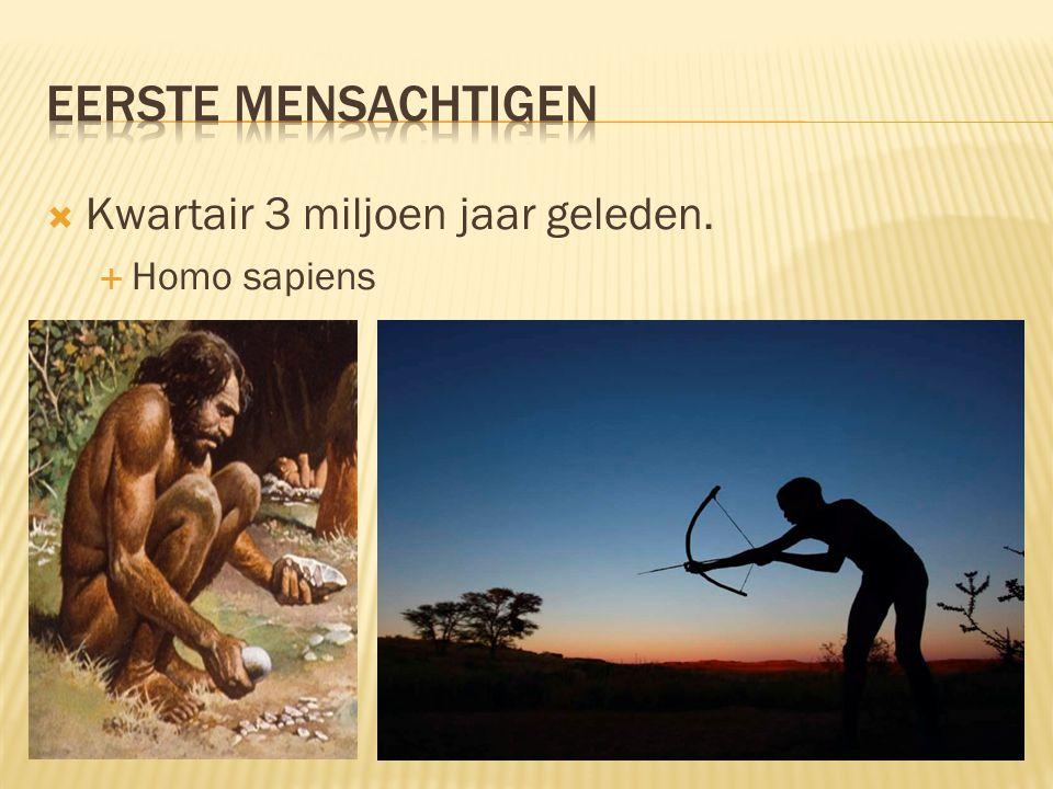 Eerste mensachtigen Kwartair 3 miljoen jaar geleden. Homo sapiens