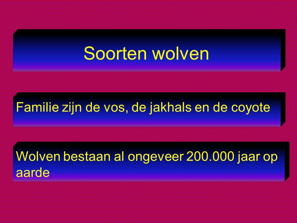 Soorten wolven Familie zijn de vos, de jakhals en de coyote