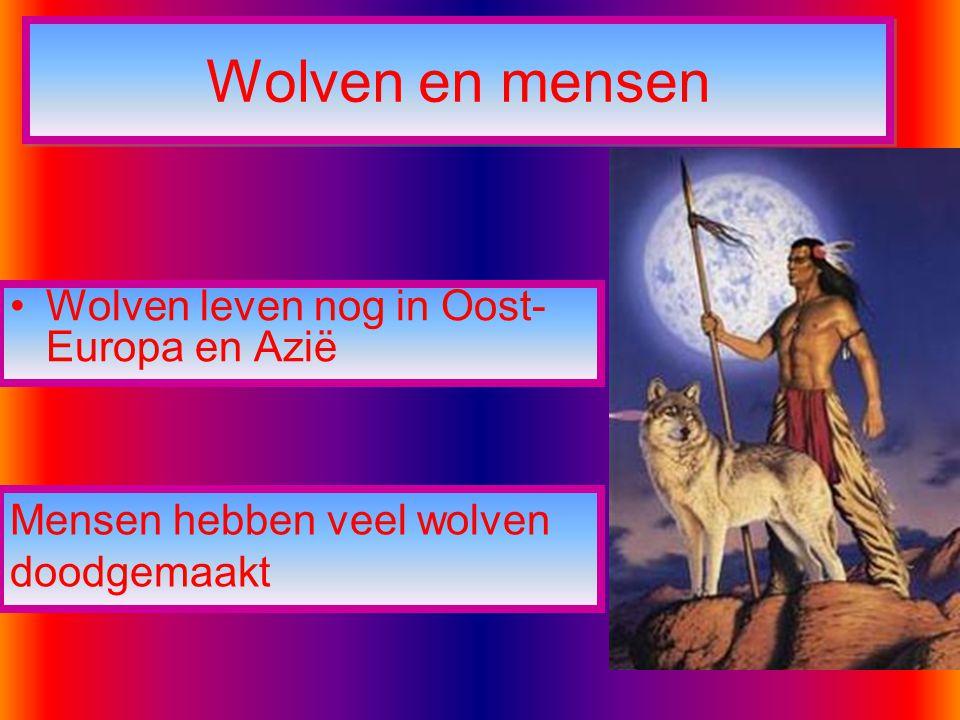 Wolven en mensen Wolven leven nog in Oost-Europa en Azië