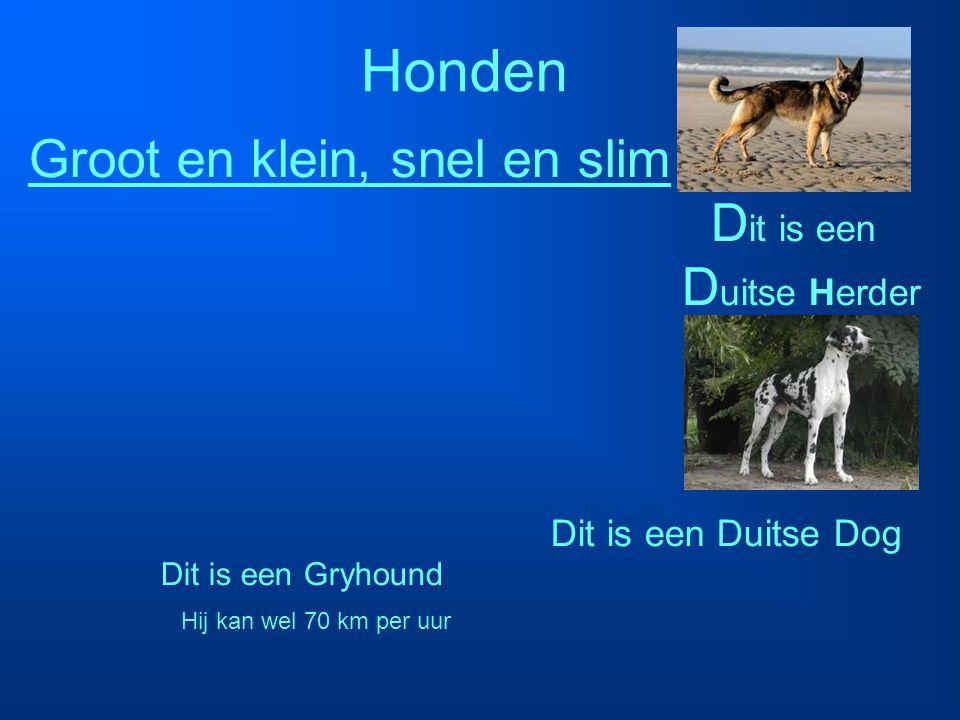 Honden Groot en klein, snel en slim Dit is een Duitse Herder