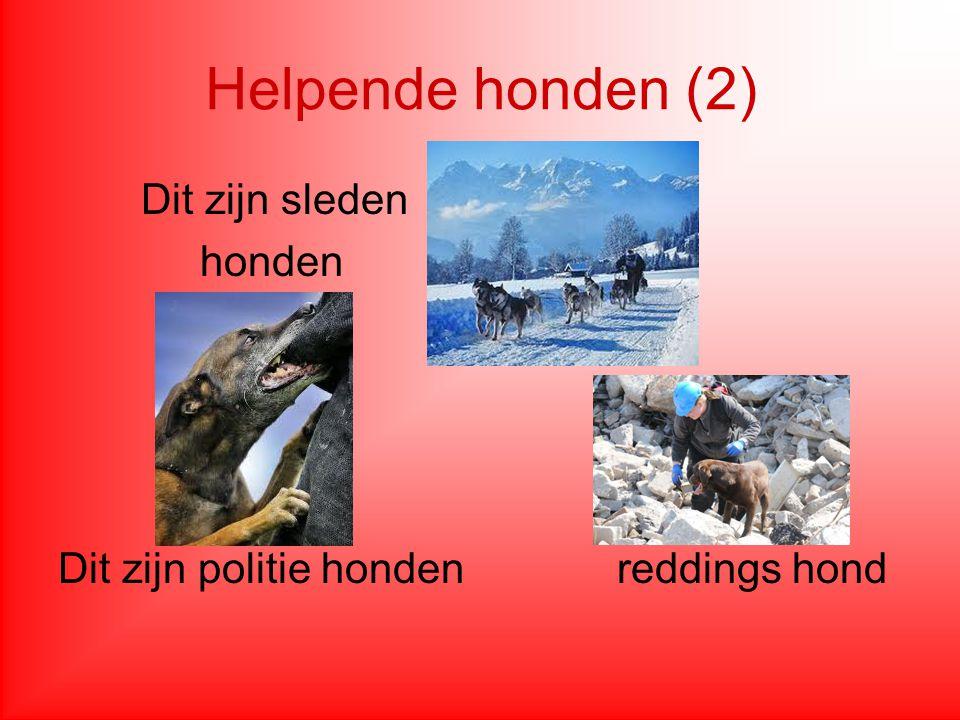 Helpende honden (2) Dit zijn sleden honden