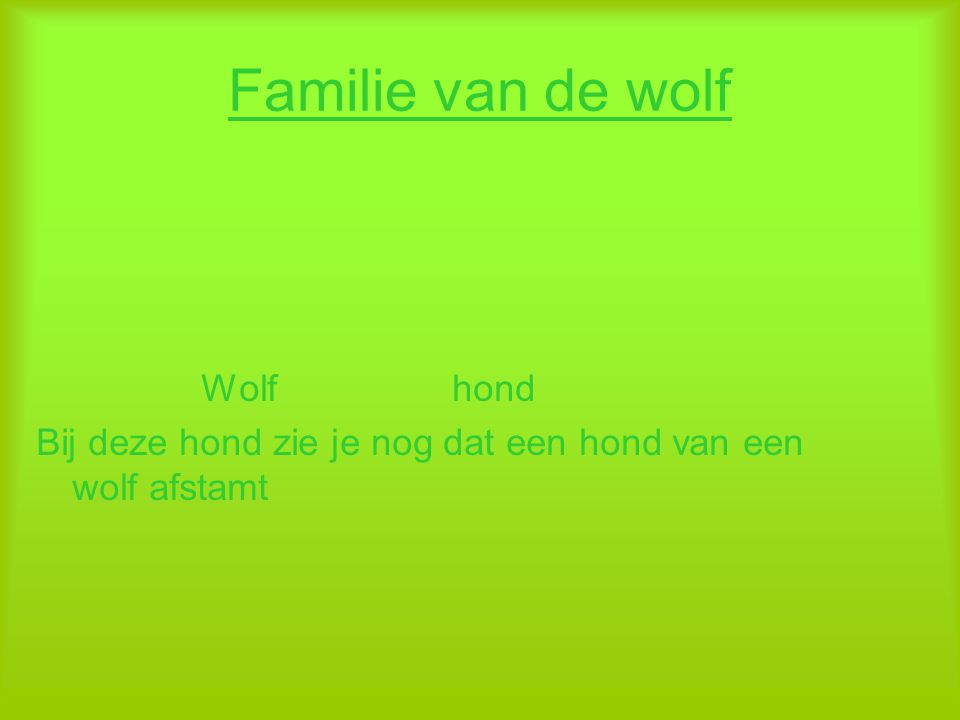 Familie van de wolf Wolf hond