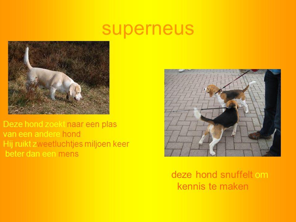superneus kennis te maken Deze hond zoekt naar een plas
