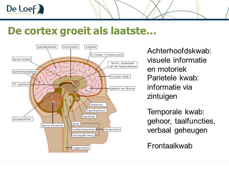 De cortex groeit als laatste…