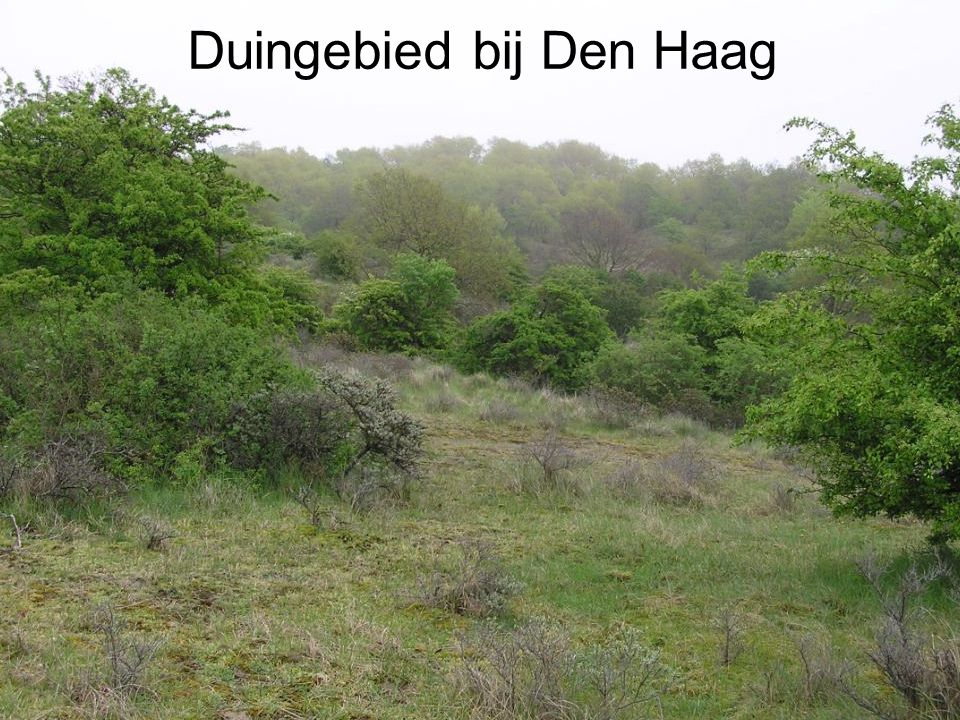 Duingebied bij Den Haag