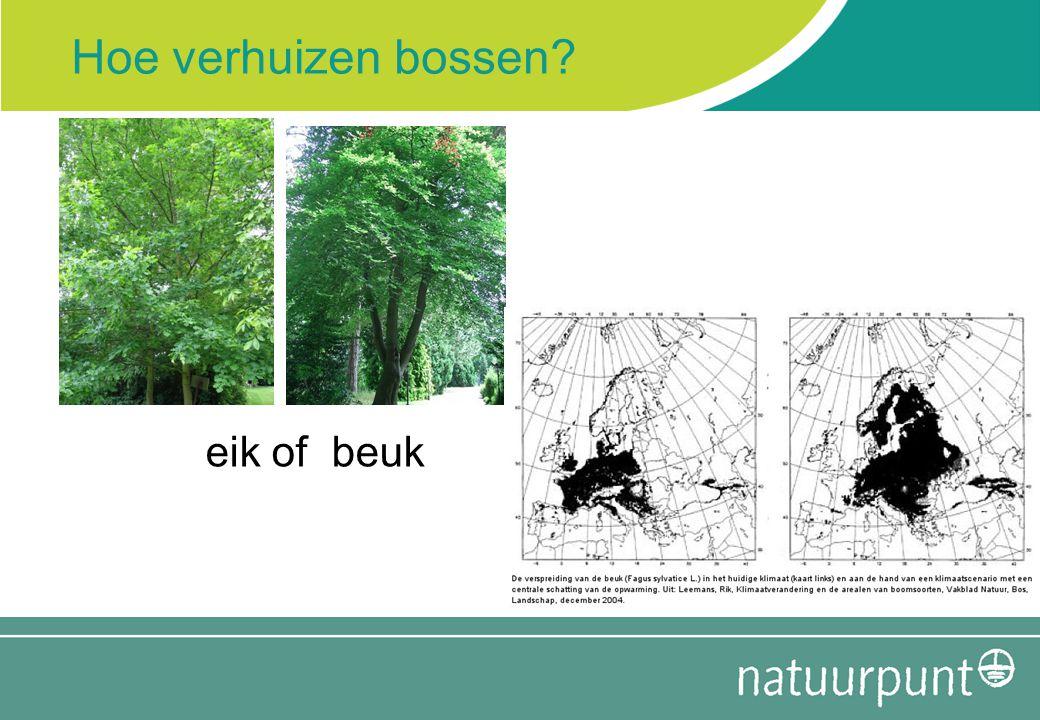 Hoe verhuizen bossen eik of beuk
