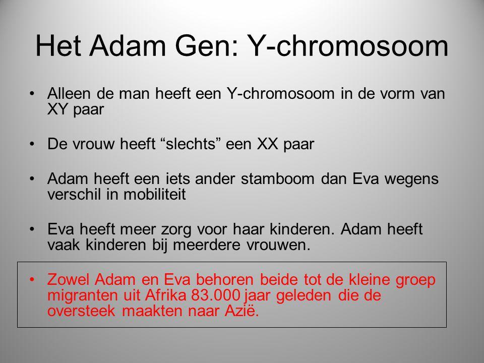 Het Adam Gen: Y-chromosoom