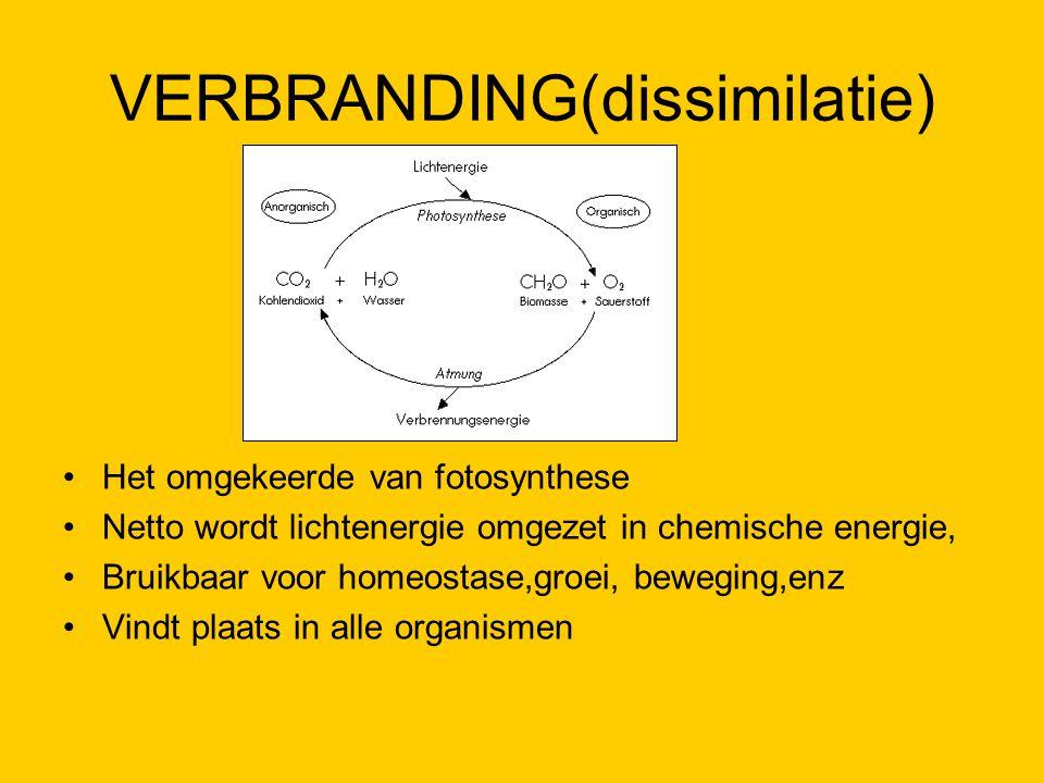 VERBRANDING(dissimilatie)