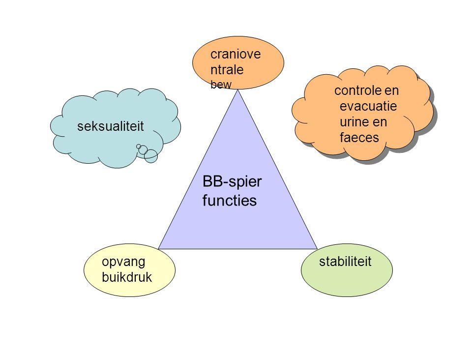 BB-spier functies opvang buikdruk cranioventrale bew stabiliteit