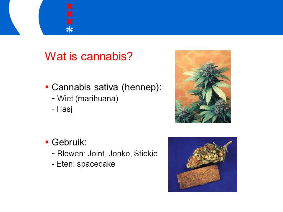 Wat is cannabis Cannabis sativa (hennep): - Wiet (marihuana) Gebruik: