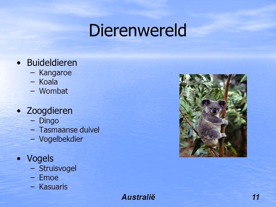 Dierenwereld Buideldieren Zoogdieren Vogels Kangaroe Koala Wombat