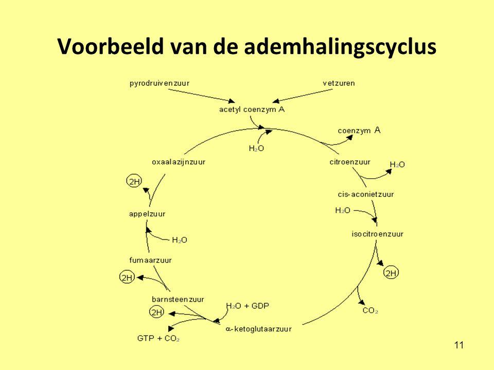 Voorbeeld van de ademhalingscyclus