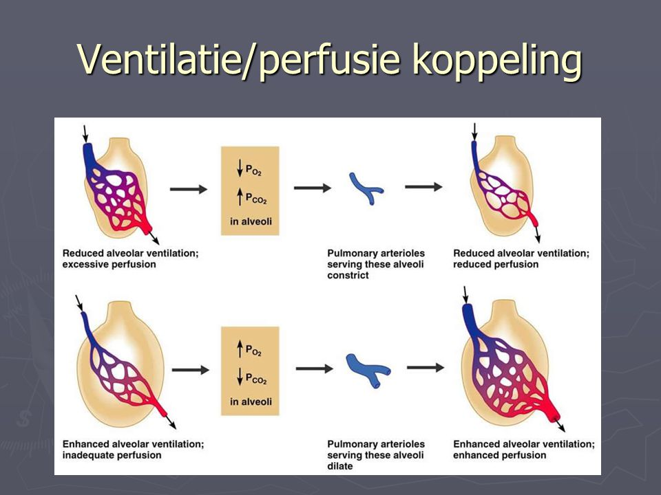 Ventilatie/perfusie koppeling