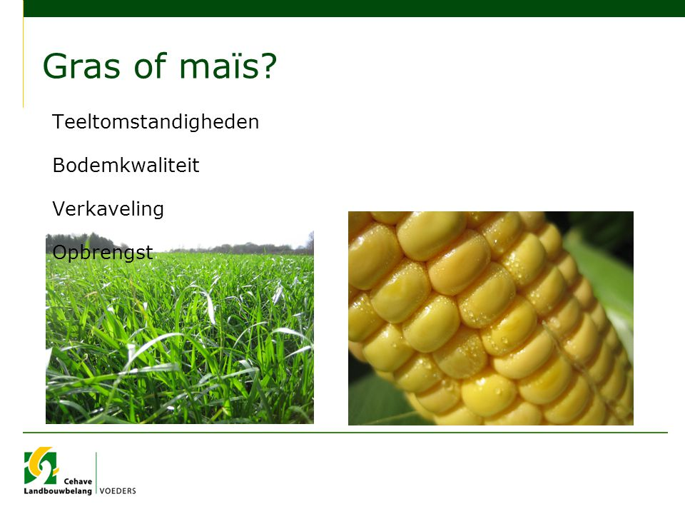 Gras of maïs Teeltomstandigheden Bodemkwaliteit Verkaveling Opbrengst