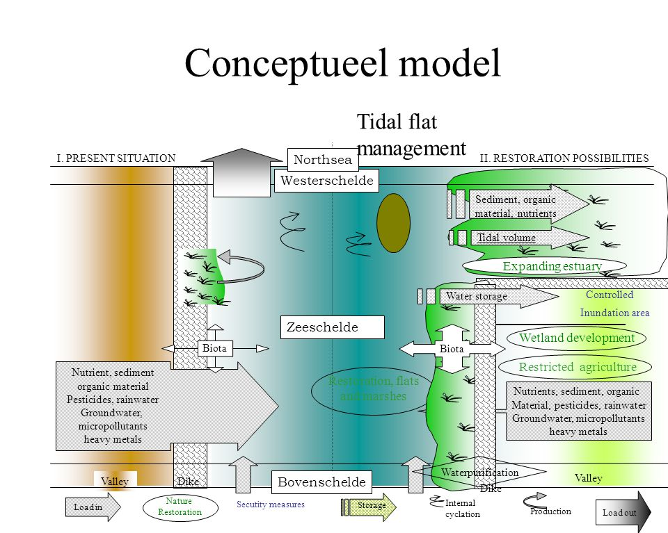Conceptueel model Tidal flat management Northsea Westerschelde