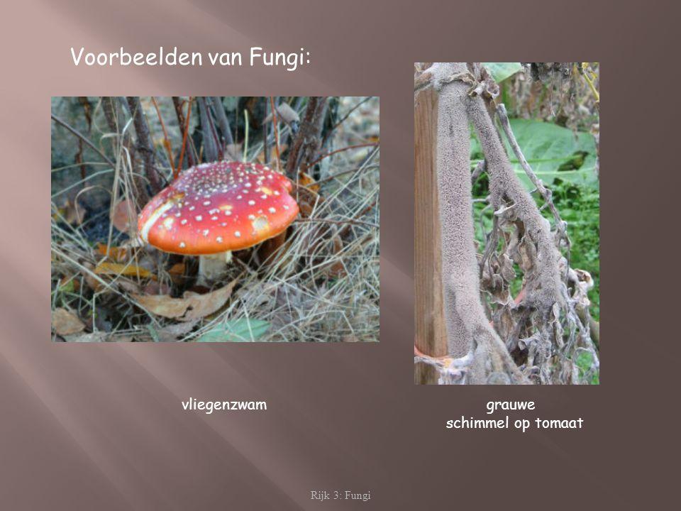 Voorbeelden van Fungi: