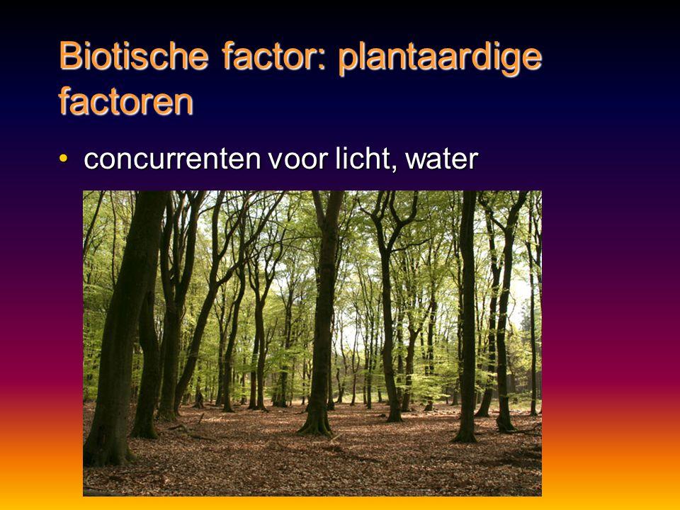 Biotische factor: plantaardige factoren