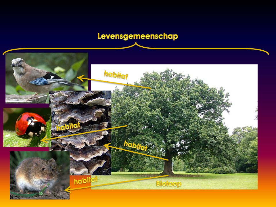 Levensgemeenschap habitat habitat habitat habitat Biotoop