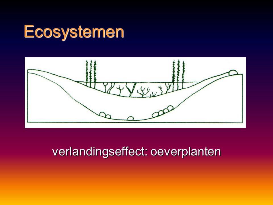 verlandingseffect: oeverplanten