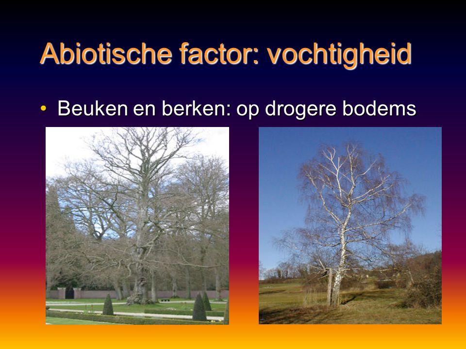 Abiotische factor: vochtigheid