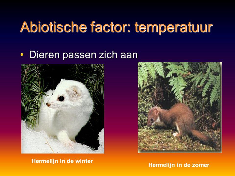Abiotische factor: temperatuur