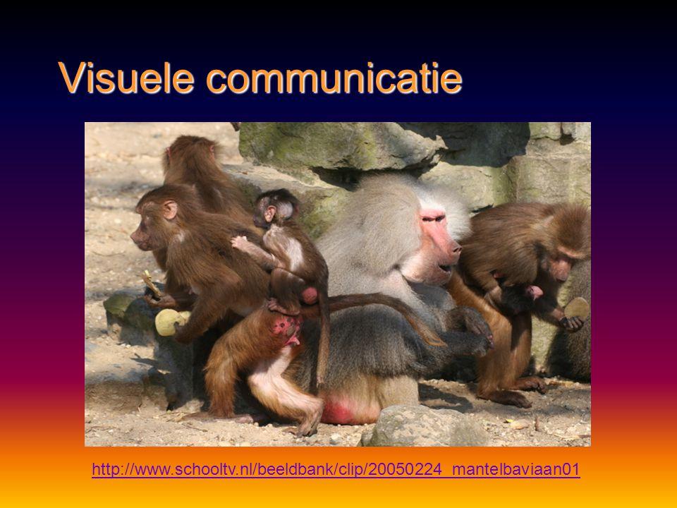 Visuele communicatie http://www.schooltv.nl/beeldbank/clip/20050224_mantelbaviaan01