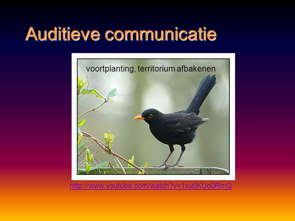 Auditieve communicatie