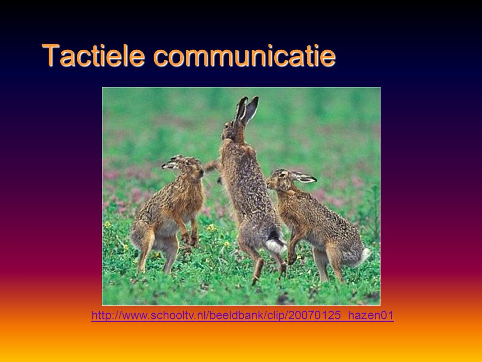 Tactiele communicatie