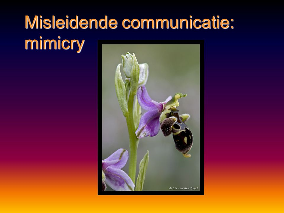 Misleidende communicatie: mimicry