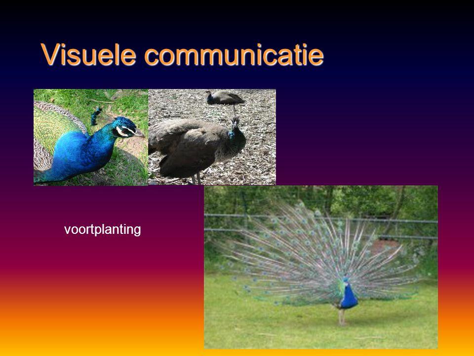 Visuele communicatie voortplanting