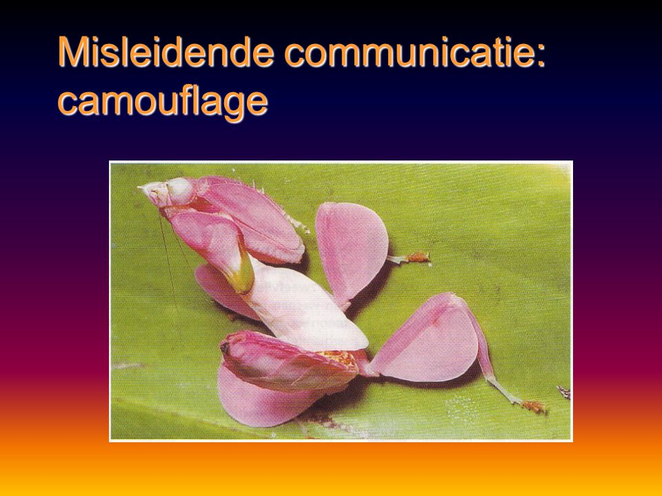 Misleidende communicatie: camouflage