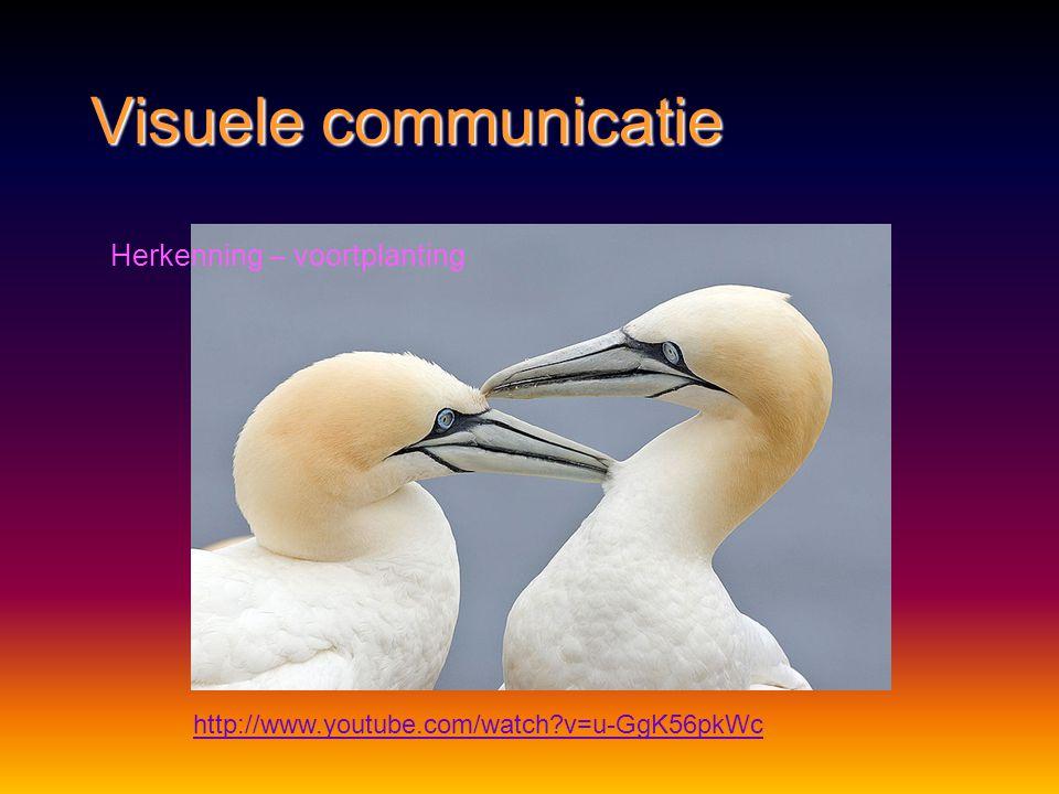 Visuele communicatie Herkenning – voortplanting
