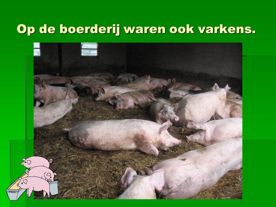 Op de boerderij waren ook varkens.