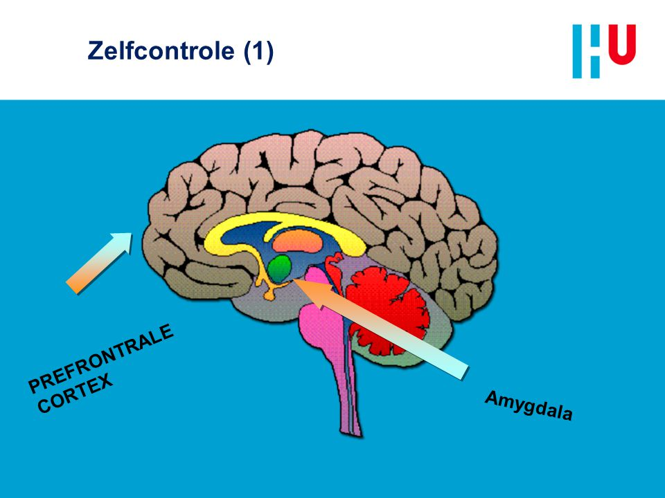 Zelfcontrole (1) PREFRONTRALE CORTEX Amygdala