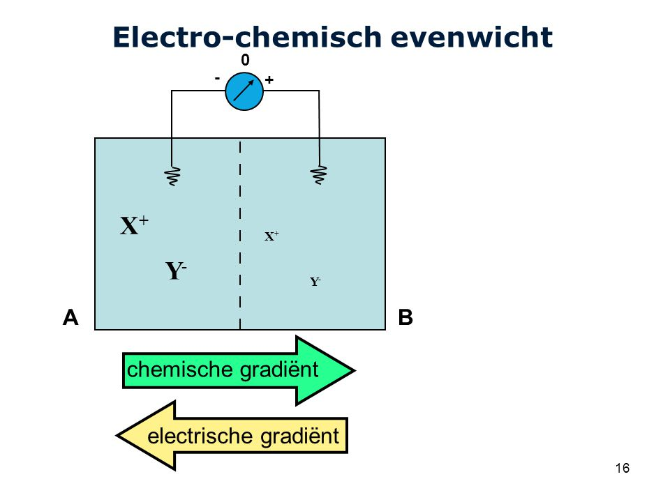Electro-chemisch evenwicht
