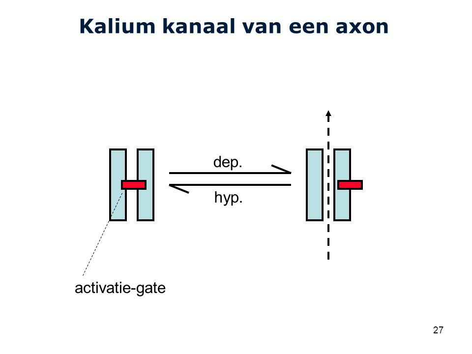 Kalium kanaal van een axon